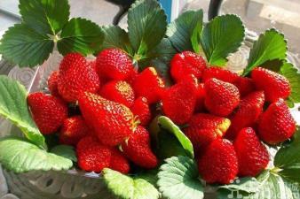 生态香莓采摘园