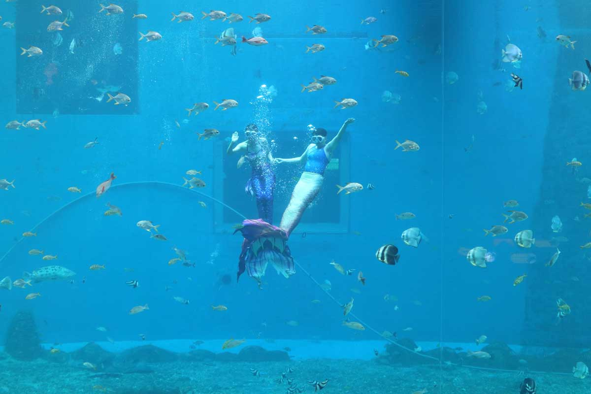 日照海洋公园门票团购日照海洋馆成人票海洋公园门票价格多少钱